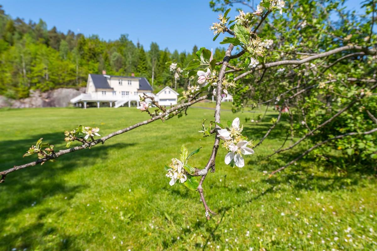 Landbrukseiendom - tvedestrand - 4 200 000,- - Meglerhuset & Partners