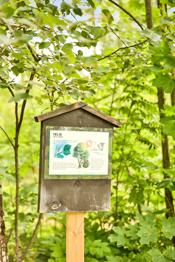 Flotte lek- og rekreasjonsmuligheter i skogen ved Askim Bygdemuseum